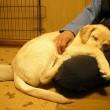 抱っこで眠る犬