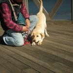 犬の伸び「前足編」