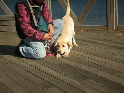 前足を伸ばす犬