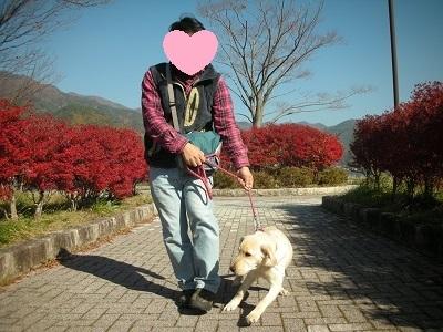 散歩で引っ張る犬