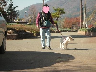 人の横で歩く犬