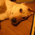 犬の伸び「後ろ足編」