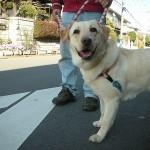 犬 思春期の処方箋