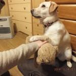 犬に芸を教えてみた!お手ができるなら「どっち?」もできる?