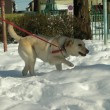 雪の上で遊ぶ子犬