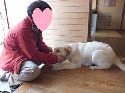 家族と触れ合う犬