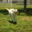 ドッグランで遊ぶ子犬