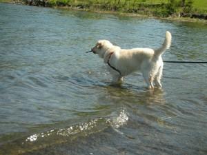 湖の岸辺で遊ぶ子犬