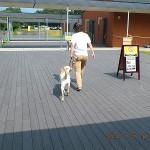 犬は1歳前後でお別れというパピーウォーカーの定め!委託修了式