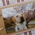 盲導犬キャリアチェンジ犬を迎えるには?条件と申請から譲渡まで