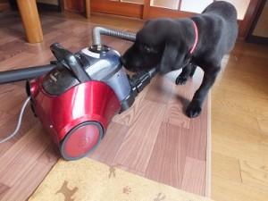 掃除機を確認する子犬