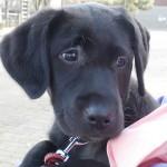 犬の車酔いのサイン|症状・原因・対策