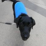 子犬の社会化 ショッピングモールを体験