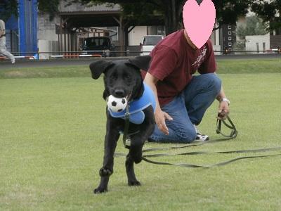 ボールの持ってこいをする犬