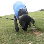 子犬の社会化 芝生を体験