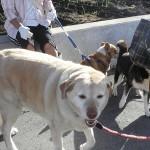 お散歩の課題 他犬との接し方