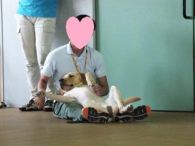 仰向けに抱っこされる訓練犬