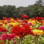 子犬の社会化 花の都公園と山中湖