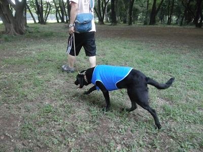 林の中を歩く犬