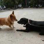子犬の社会化 所沢航空記念公園 他犬と穏やかにすれ違う