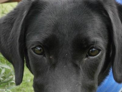 カメラを見つめる犬