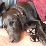 犬と一緒に布団で寝るのは禁止 でも抱き枕にしています