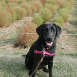 子犬の社会化 国営武蔵丘陵森林公園