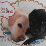 2017年 盲導犬寄付金付き「スマイルカレンダー」