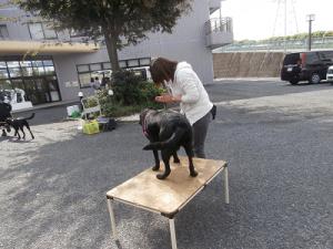 訓練士に褒められる犬