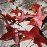 秋の風と落ち葉のメロディー