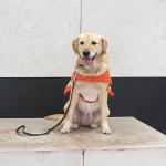 盲導犬PR犬カンナの卒業式に行ってきました