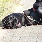 子犬の社会化 飛び石とグレーチング
