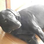 犬にとって家は休む場所