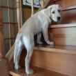 階段を1段だけ昇る子犬