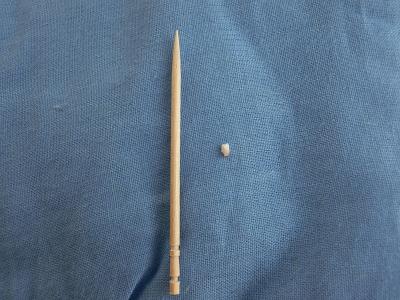 子犬の乳歯と楊枝の大きさ比べ