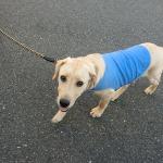 お散歩 犬に試されている?