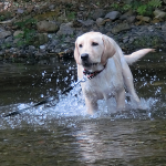 川遊び初体験 子犬の心の動きを観察してみた
