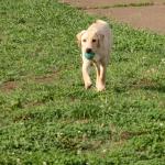 遊んだりのんびりしたり 子犬の散歩