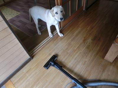 立ち止まる子犬
