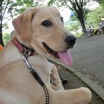 盲導犬パピー 排泄の悩みそれぞれ