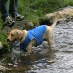 犬とおでかけ 田貫湖