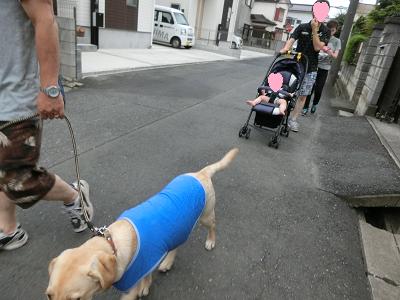 散歩する子犬とバビーカーの赤ちゃん