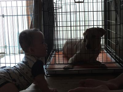ハイハイする赤ちゃんと伏せる子犬