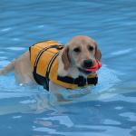 犬とプールを体験 わんダフルネイチャーヴィレッジ