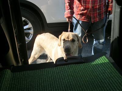 車に飛び乗ろうとする犬