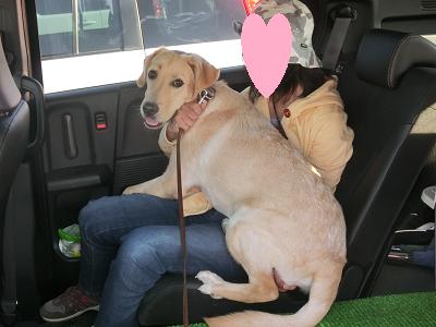 人の膝に乗る犬