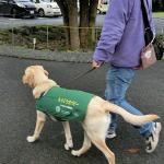 犬の下痢予防のために気をつけている3つのこと