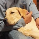 体表腫瘤 愛犬の身体 どこでも触れますか?