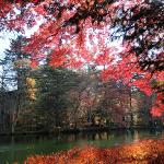 犬連れ軽井沢 紅葉の雲場池と旧軽井沢銀座