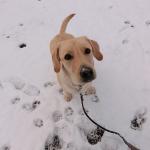 子犬の初雪体験